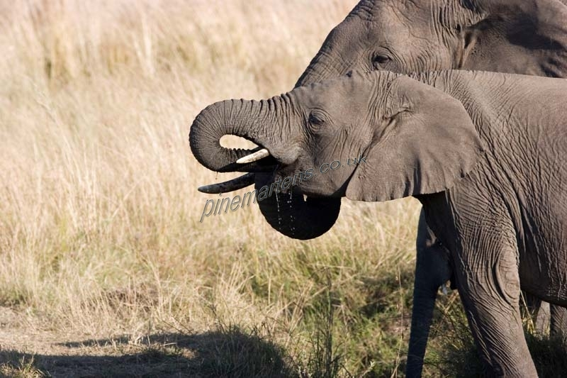 Elephant-1536
